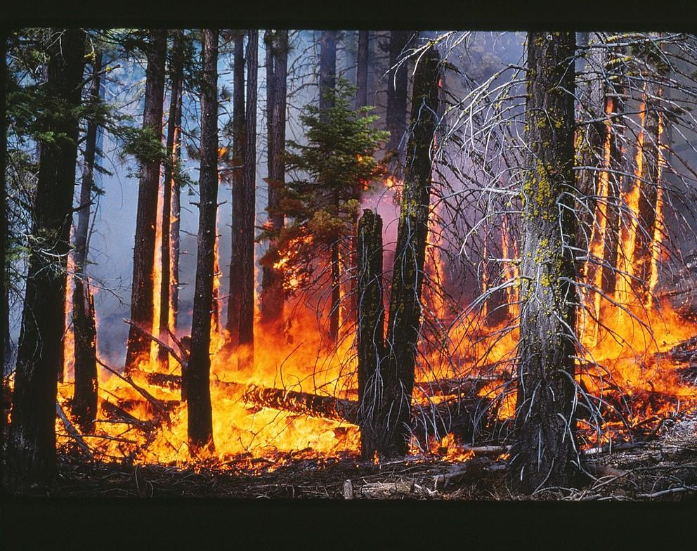 controlled burn mixed conifer forest