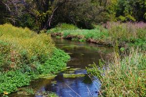 Millbrook Marsh